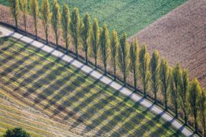 Aerial view of a row of shade-casting poplars at the roadside - Klaus Leidorf Aerial Photography