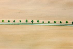 Aerial view of a fresh green row of trees at the roadside between two newly planted maize fields - Klaus Leidorf Aerial Photography