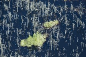 Aerial view of a green island between dead trees - Klaus Leidorf Aerial Photography