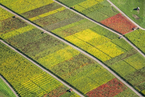 Aerial view of autumnally coloured vine fields in the Neckar valley - Klaus Leidorf Aerial Photography
