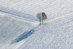 Aerial view of two deciduous trees on a snowy winter field - Klaus Leidorf Aerial Photography