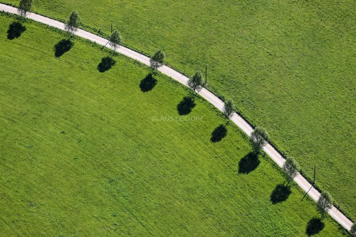 Aerial view of birches at the roadside with shadow - Klaus Leidorf Aerial Photography