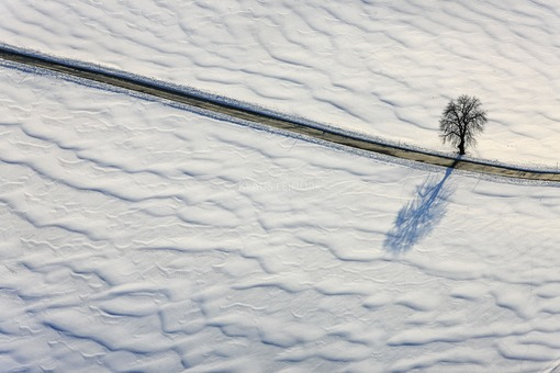 Aerial view of a lonely tree with shade on snow-covered fields or meadows crossed by an empty road - Klaus Leidorf Aerial Photography