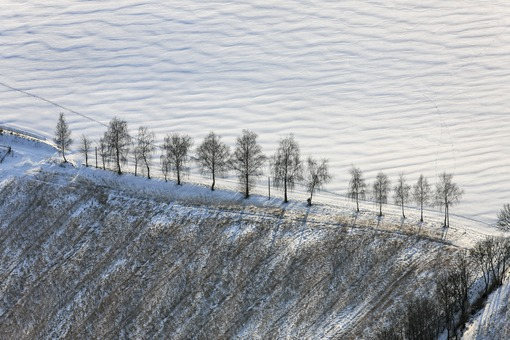 Aerial view of a birch row in Buch am Erlbach - Klaus Leidorf Aerial Photography