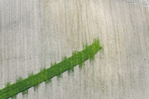 Aerial photograph of a green stripe in a maize field - Klaus Leidorf Aerial Photography