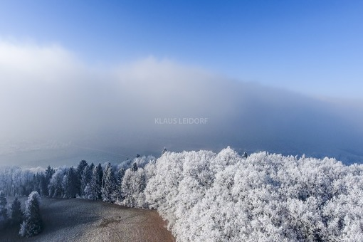 Aerial view with the drone of the edge of an oak forest, which appears completely white from the cold frost - Klaus Leidorf Aerial Photography
