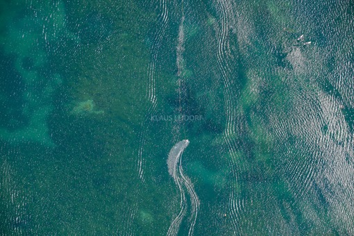 Aerial view of the Friedberger Baggersee - Klaus Leidorf Aerial Photography
