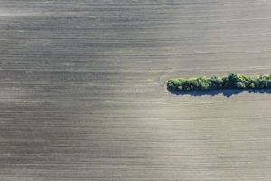 Aerial photograph of the remains of a hedge in the agricultural landscape - Klaus Leidorf Aerial Photography