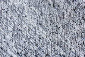 Aerial photograph of the dead coniferous forest at Lusen in the Bavarian Forest - Klaus Leidorf Aerial Photography