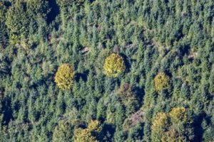Aerial view of the already autumnally colored Hainsbach Forest - Klaus Leidorf Aerial Photography