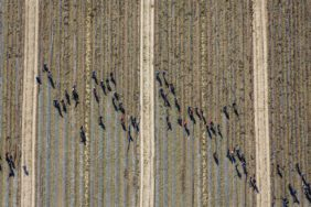 Aerial photograph of clean-up work in the harvested cucumber field - Klaus Leidorf Aerial Photography