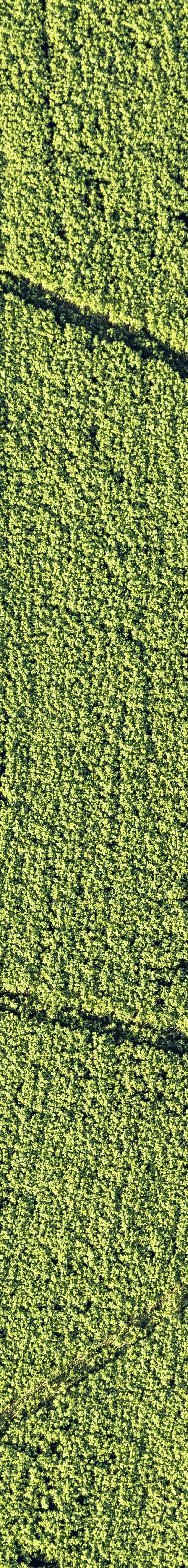 Aerial view of farm painting near Zulling - Klaus Leidorf Aerial Photography