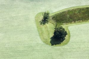 Aerial view of tree and shrub on mowed meadow - Klaus Leidorf Aerial Photography