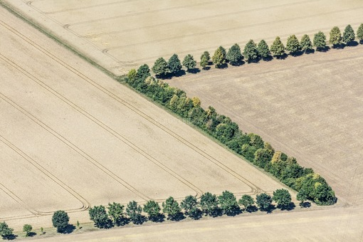 Aerial view of rows of trees in the farmland - Klaus Leidorf Aerial Photography
