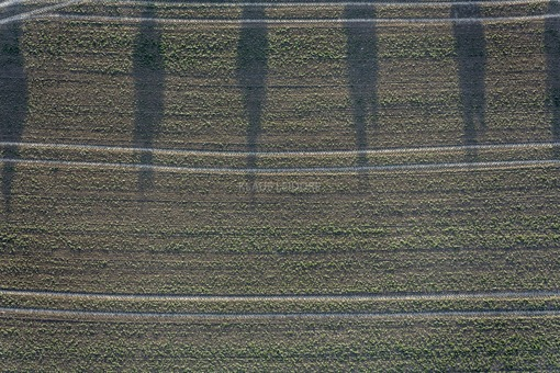 Aerial view of tree shadows on a field in the evening light - Klaus Leidorf Aerial Photography
