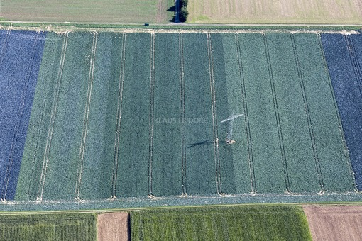 Aerial view of red cabbage fields near Mirskofen - Klaus Leidorf Aerial Photography