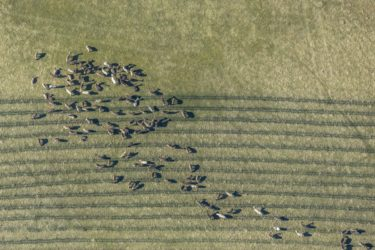 Aerial view of fallow deer in the enclosure - Klaus Leidorf Aerial Photography