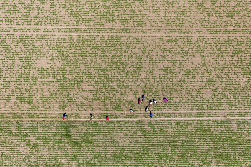 Aerial photograph of harvest workers on a field near Altheim, Essenbach - Klaus Leidorf Aerial Photography