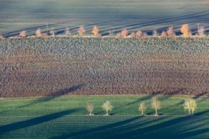 Aerial view of rows of autumn trees at the edge of the field - Klaus Leidorf Aerial Photography