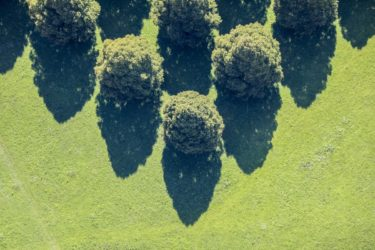 Aerial view of rows of linden trees at the New South Cemetery in Munich-Perlach - Klaus Leidorf Aerial Photography