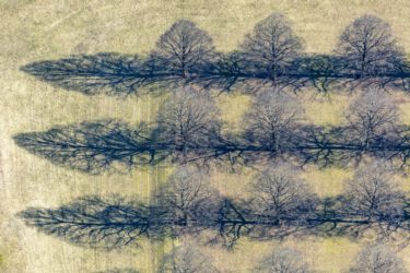 Aerial view of rows of linden trees in the square enclosure on the New South Cemetery in Munich-Perlach - Klaus Leidorf Aerial Photography