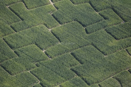 Aerial view of people in the cornfield labyrinth near Pottenstein-Kleinlesau - Klaus Leidorf Aerial Photography