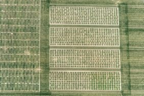 Aerial photograph of seed breeding fields for cereals near Wallerfing-Oberviehhausen - Klaus Leidorf Aerial Photography