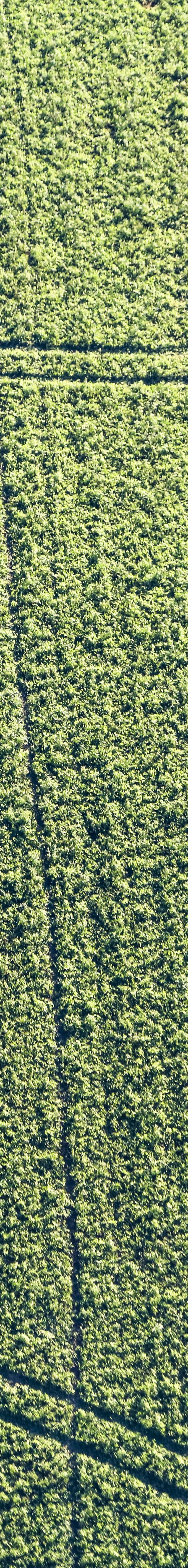 Aerial view of traces in the green field - Klaus Leidorf Aerial Photography