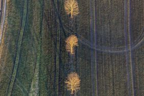 Aerial view of trees illuminated in the evening at the edge of the field - Klaus Leidorf Aerial Photography