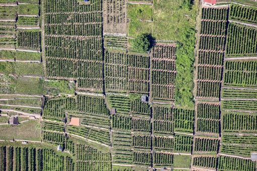 Aerial view of old vineyard terraces near Karlstadt-Gambach - Klaus Leidorf Aerial Photography