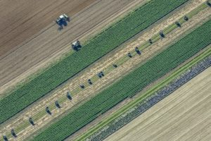 Aerial photograph of the farmer's field work - Klaus Leidorf Aerial Photography