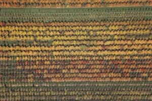 Aerial view of the fruit tree plantation Deutenkofen in autumn - Klaus Leidorf Aerial Photography