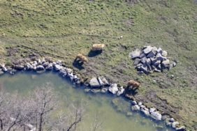 Aerial view of three bears in Poing Game Park - Klaus Leidorf Aerial Photography