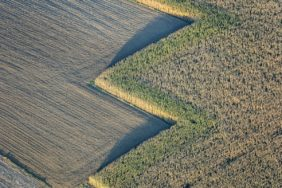 Aerial photograph of angular edges of a maize field - Klaus Leidorf Aerial Photography