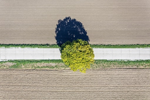 Aerial view of a tree on a concrete field path - Klaus Leidorf Aerial Photography