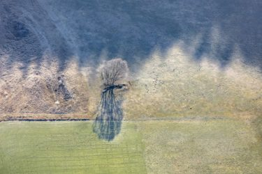 Aerial view of a tree at the frost line in the Ochsenau in Landshut-Auloh - Klaus Leidorf Aerial Photography