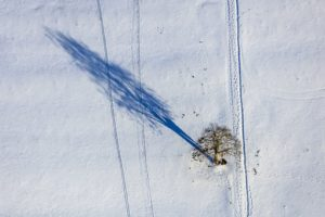 Aerial view of a tree with shadow in winter landscape - Klaus Leidorf Aerial Photography