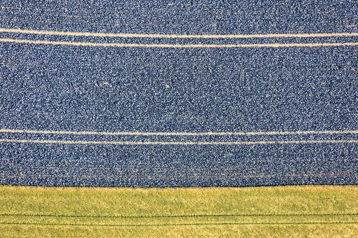 Aerial view of a red cabbage field in Lower Bavaria - Klaus Leidorf Aerial Photography