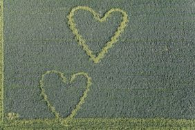 Aerial view of a double heart with sunflowers in the Phacelia field - Klaus Leidorf Aerial Photography