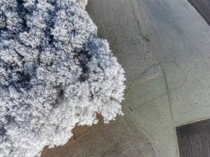 Aerial view of an oak forest with ice crystals - Klaus Leidorf Aerial Photography