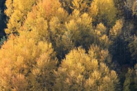 Aerial view of an autumn forest - Klaus Leidorf Aerial Photography