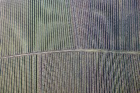 Aerial view of a hop field near Nandlstadt-Kainrad - Klaus Leidorf Aerial Photography