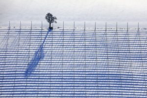 Aerial view of a hop field with a shady tree in winter - Klaus Leidorf Aerial Photography