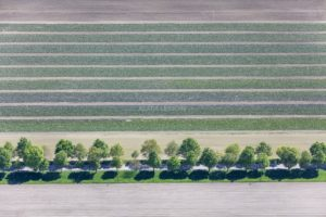 Aerial view of a cabbage field next to an avenue in Ismaning - Klaus Leidorf Aerial Photography