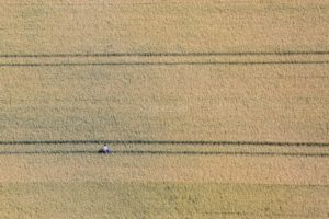 Aerial photograph of a farmer checking the maturity of his wheat field - Klaus Leidorf Aerial Photography