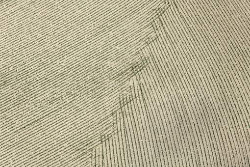 Aerial photograph of a maize field in Dettendorf - Klaus Leidorf Aerial Photography