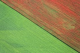 Aerial view of a poppy field - Klaus Leidorf Aerial Photography