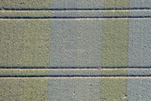 Aerial photo of a deer with fawn in the seed breeding field - Klaus Leidorf Aerial Photography