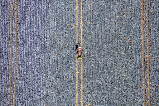 Aerial view of a red tractor in the red cabbage field - Klaus Leidorf Aerial Photography