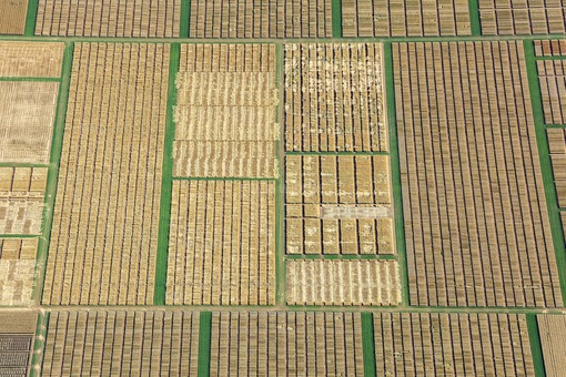 Aerial photograph of a seed breeding field near Prosselsheim - Klaus Leidorf Aerial Photography
